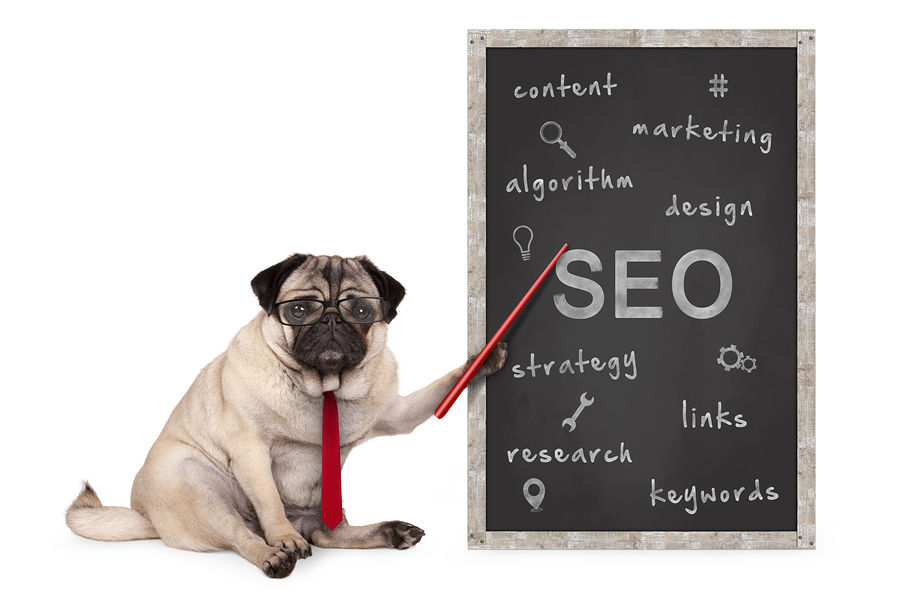 Picture of a pug presenting SEO terms from a blackboard